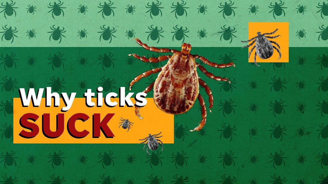 are-you-risking-lyme-disease-here-s-how-to-remove-ticks