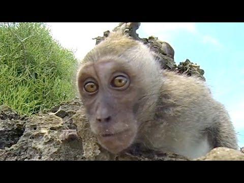Гирлянда обезьянки