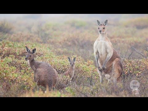 Australia's biodiversity: major features