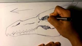 How to Draw a Dragon Skull - Skull Drawings