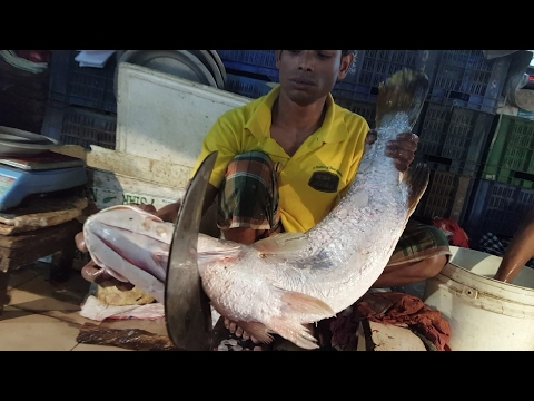 Big Sea Bass Fish Cutting | Amazing 14 KG Nile Perch Fish Slice In Fish Market