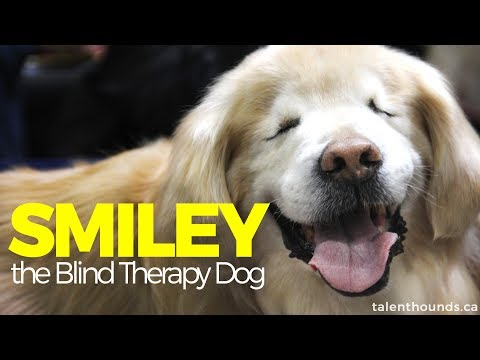 How Smiley the Amazing Blind Therapy Dog brought Smiles to Millions