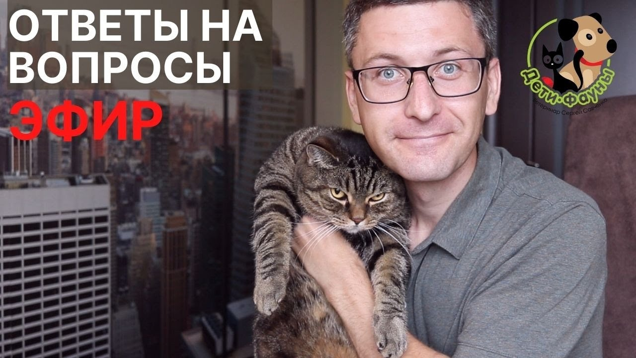 16.10.21 Ветеринар Сергей и кот Сэмыч отвечают на вопросы о кошках и собаках