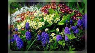 Лучшие первоцветы для вашего сада