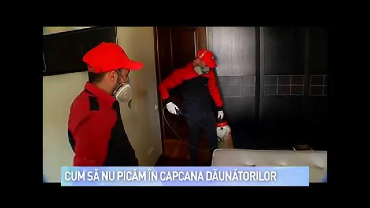 gândacii de febră din paraziți)