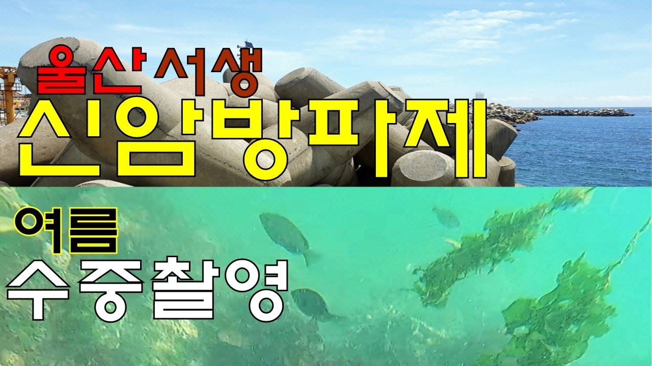 어종박물관 신암방파제, 한여름 물 속엔 어떤 낚시 대상어가 살고 있을까?