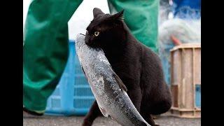 кошки коты воры. Кот ограбил хозяйку