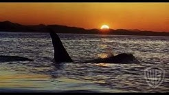 Free Willy Trailer