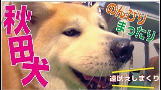 番組提供:ペットライン株式会社(http://www.petline.co.jp/) 「HACHI...