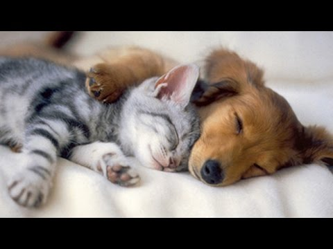 Cute sleepy animals - Cute animal Compilation - YouTube