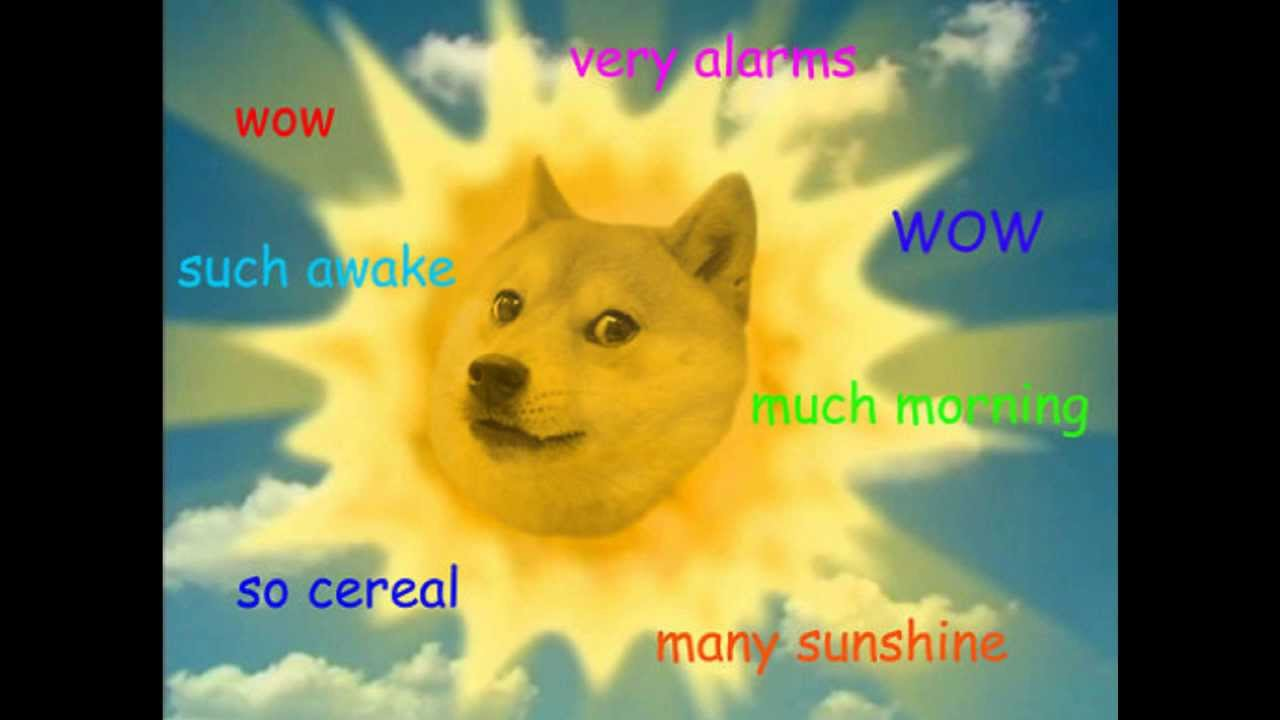 doge the best of