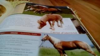 Quel cheval serais tu ? ( Crée par Enjoy ze ride !!!) 🐴