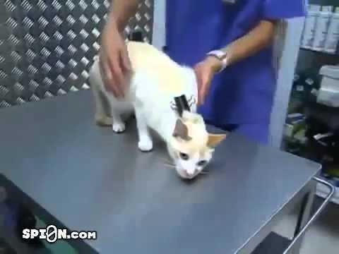 гипноз для кота,прикол