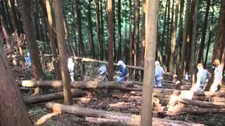 Japan Studies Pollen In Japan