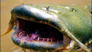 Can a Catfish Kill You