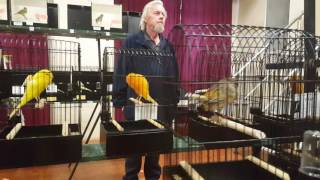Download Yorkshire Canary club Melbourne annual show 2016 Mp3