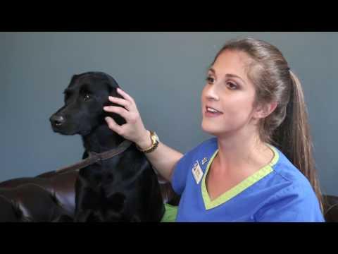 Why I use Petplan Pet Insurance...