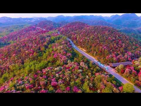 航拍贵州百里杜鹃风景名胜区,太美了
