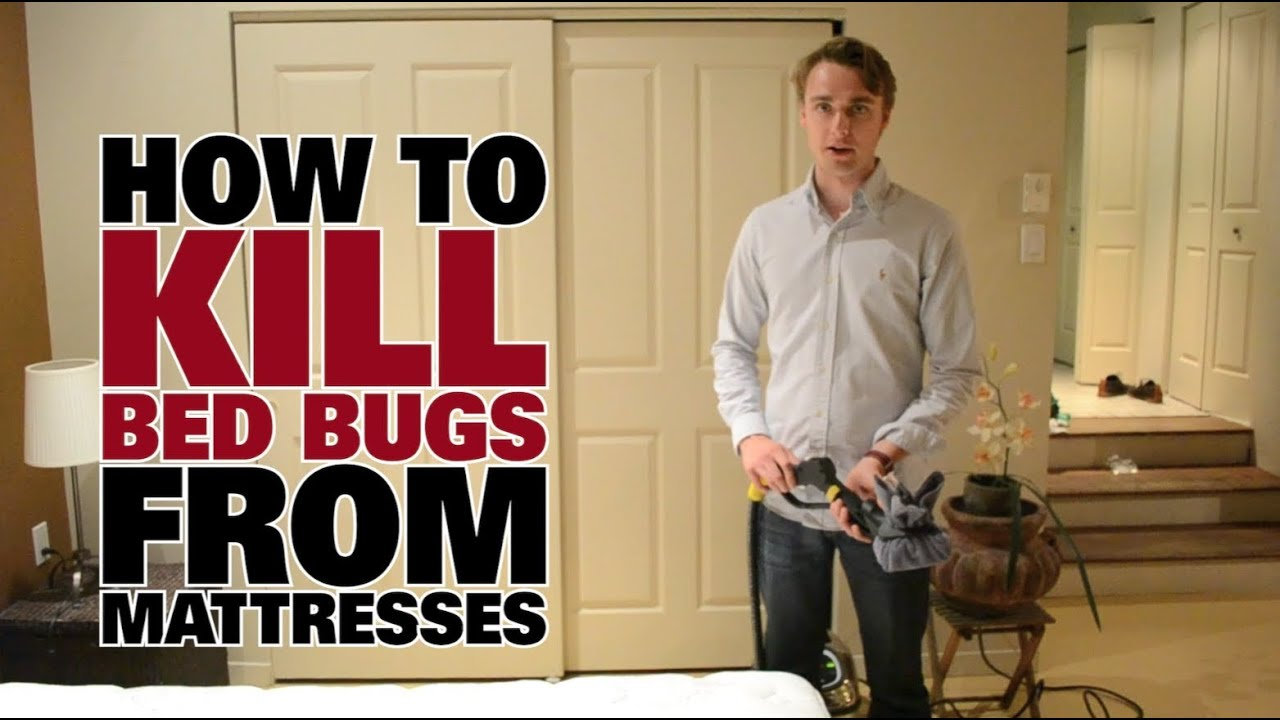 vid os punaises de lit how to get rid of bed bugs dupray. Black Bedroom Furniture Sets. Home Design Ideas