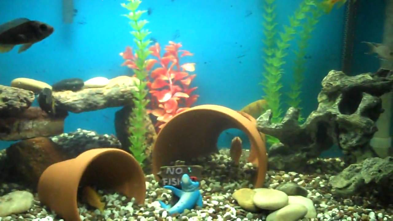African cichlid tank update youtube for Aquarium decoration ideas cheap