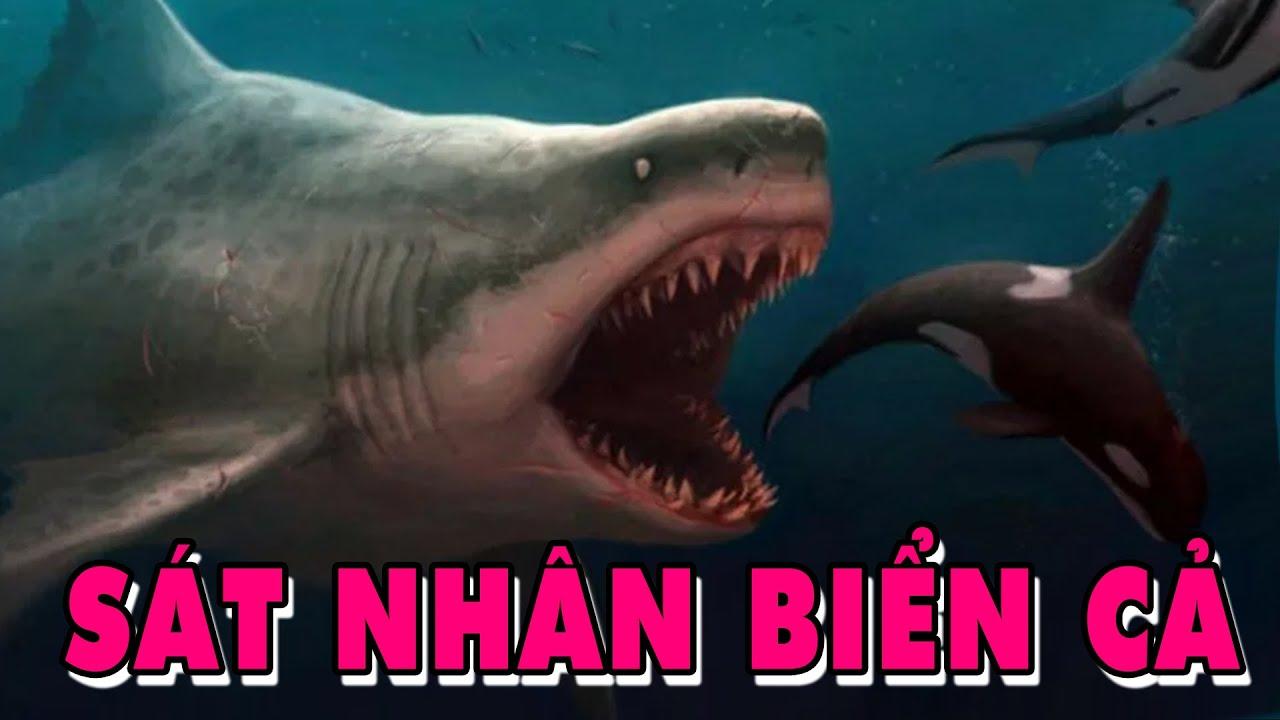 Bằng Chứng Cho Thấy Cá Mập Khổng Lồ MEGALODON Vẫn Còn Tồn Tại