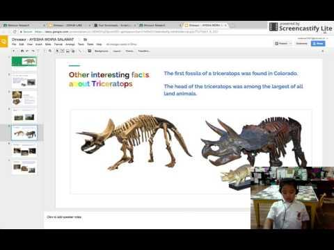 Ayesha - Triceratops