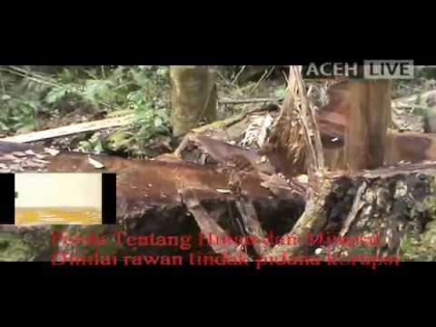 Aturan Tentang Hutan dan Mineral Aceh Rawan Korupsi