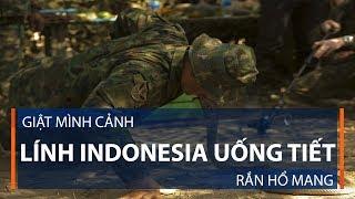 Giật mình cảnh lính Indonesia uống tiết rắn hổ mang   VTC1