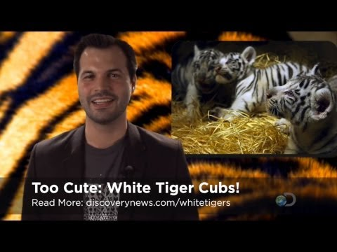 TWiDN: White Tigers are Cute, Organic Food Ain't