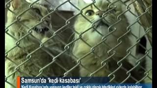 Samsun'da 'kedi kasabası'