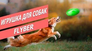 Игрушка для собак Флайбер |  Обзор летающей тарелки для собак | Flyber - Dog toy review