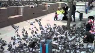 Голуби в Турции(Created on Ноябрь 17, 2010 using FlipShare., 2011-01-19T06:05:40.000Z)
