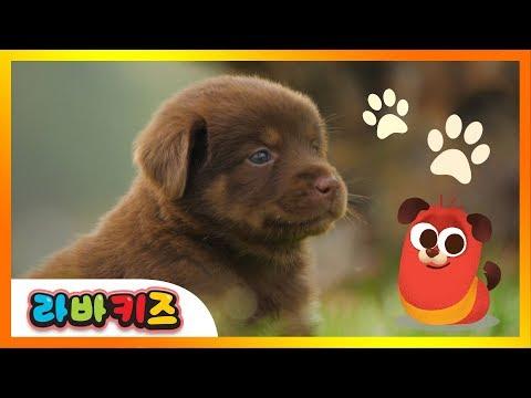 [NEW!] 동물 노래   라바키즈   동물 친구들   실사애니메이션   인기동요
