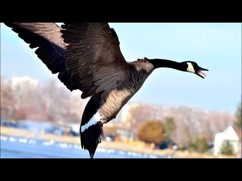 What Makes a Bird a Bird