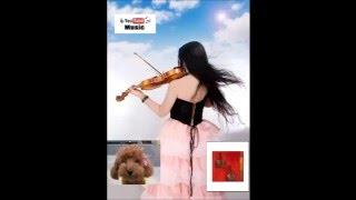 Violin : Steven Jj.