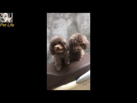 Funny Dogs And Cats Video 2019 | Cute Dogs |  PET LIFE #5