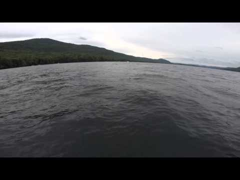 Rattlesnake Swimming in Lake George NY