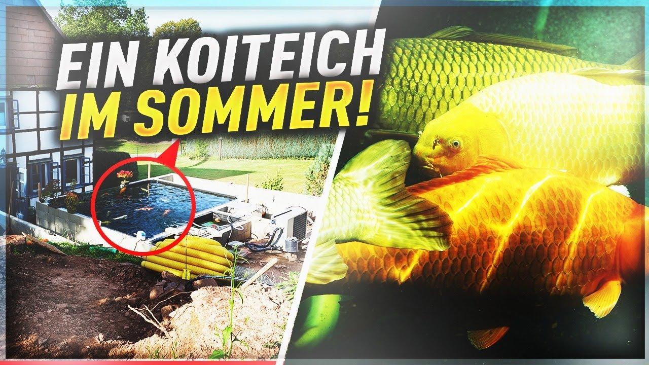 Koiteichblog [181] ★ Ein KOITEICH im HOCHSOMMER!