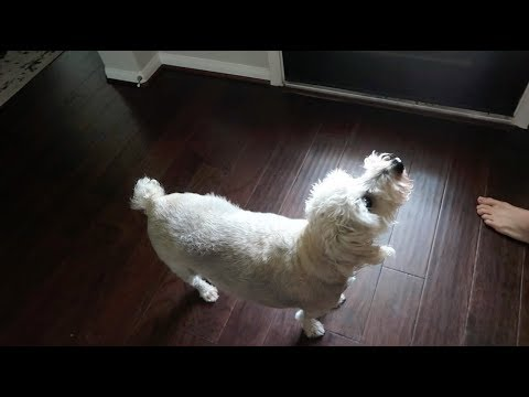 Does Our Dog See a Ghost?! ????
