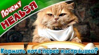 ➤Почему нельзя, кормить кота перед стерилизацией?➤