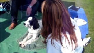 Headley Fete Springer Spaniel 'black & White' Sept 2014