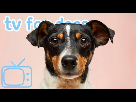 TV For Dogs! Relax Your Dog And Enjoy Calming TV + ASMR Music! NEW!