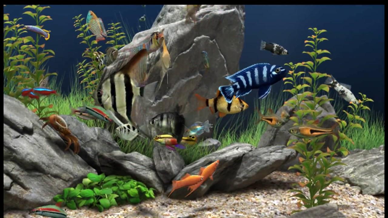 Dream aquarium the best virtual aquarium youtube - Dream aquarium virtual fishtank 1 ...