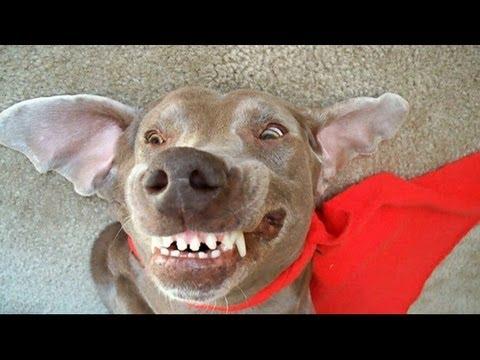 Britney My Sleep Walking Sleep Running sleep Barking Dog says move over Bizkit