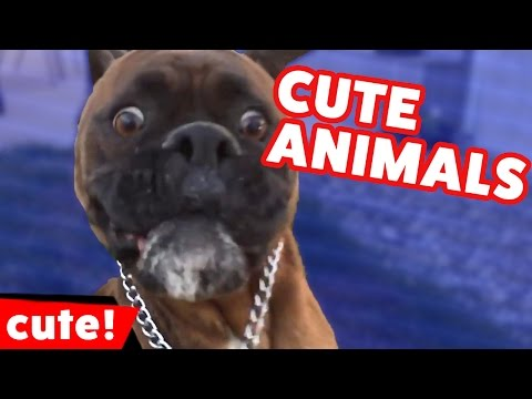 Funniest Cut Pet & Animal Home Video Bloopers & Reactions of December 2016 | Kyoot Animals