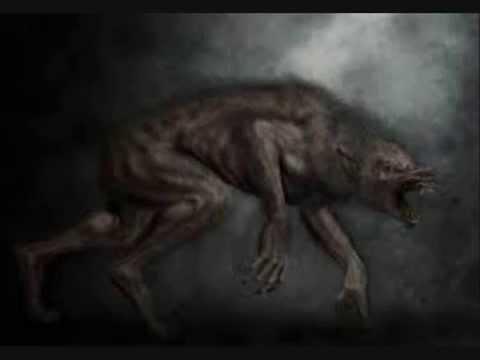 what is a lycan werewolf
