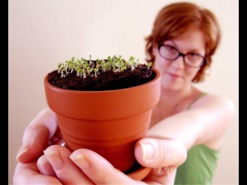 Основные ПРАВИЛА УХОДА за комнатными растениями. Памятка для начинающих цветоводов