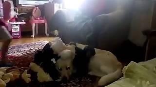Найди собаку!!!)