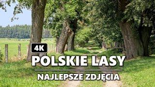 Polskie lasy