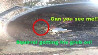#Dubzanator : Baby squirrel getting his grub on